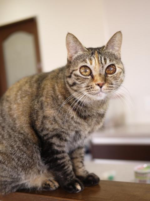猫のお留守番 ワサビちゃん天ちゃん麦くん茶くん編。_a0143140_2002952.jpg