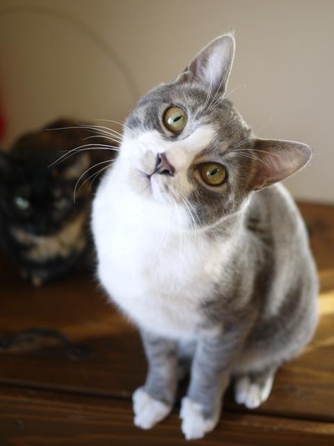猫のお留守番 ワサビちゃん天ちゃん麦くん茶くん編。_a0143140_2014451.jpg