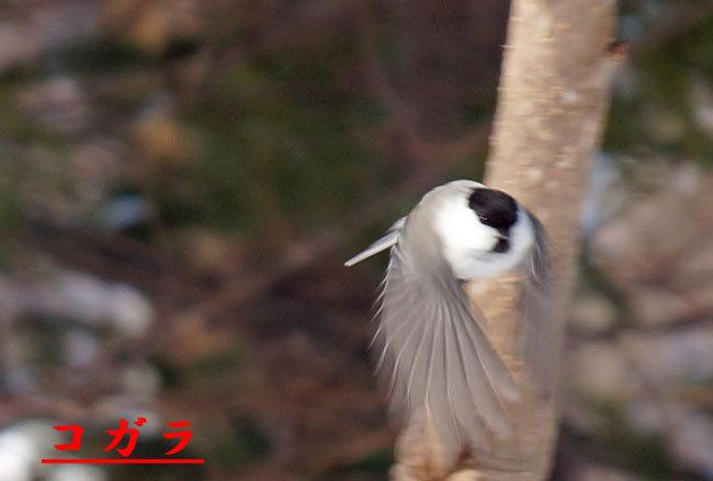 小鳥_d0162994_08172930.jpg