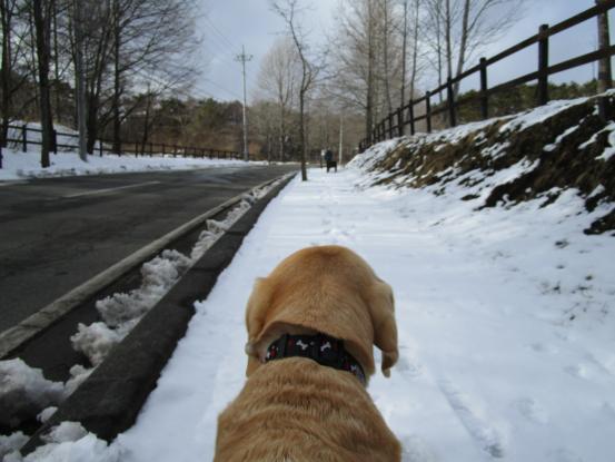 融雪剤_f0064906_17043587.jpg