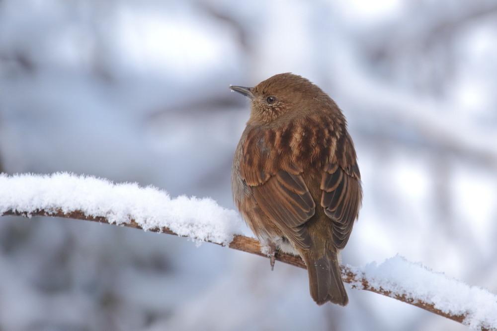 今日の鳥見(2017年2月12日)_f0235311_22372888.jpg