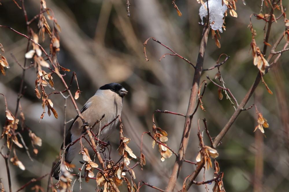 今日の鳥見(2017年2月12日)_f0235311_22435056.jpg