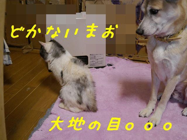 f0282319_0353640.jpg