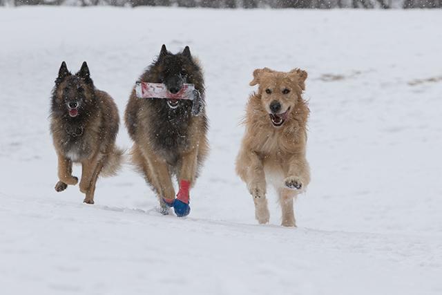 先週の雪遊び_e0192921_23262647.jpg