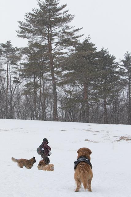 先週の雪遊び_e0192921_23262681.jpg