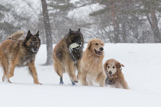 先週の雪遊び_e0192921_23263323.jpg