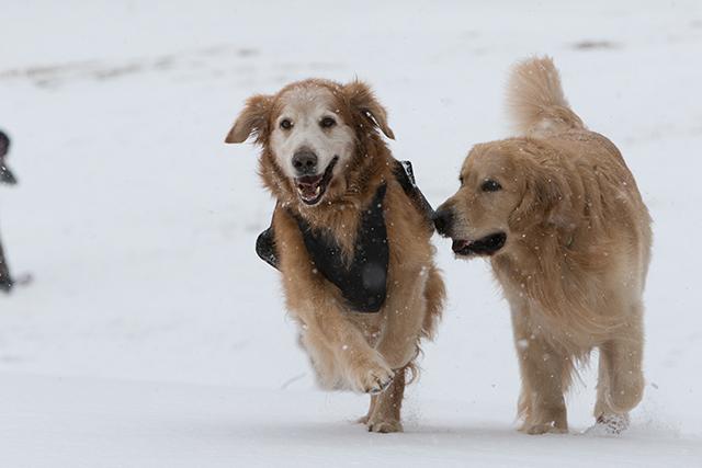 先週の雪遊び_e0192921_23263390.jpg