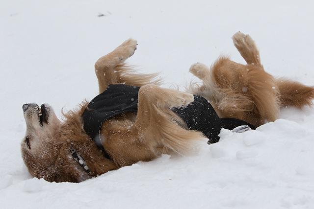 先週の雪遊び_e0192921_23263766.jpg