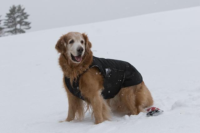 先週の雪遊び_e0192921_23263771.jpg
