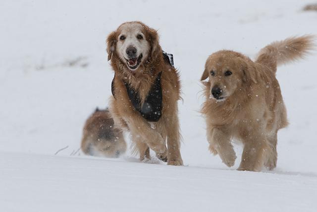 先週の雪遊び_e0192921_23263802.jpg