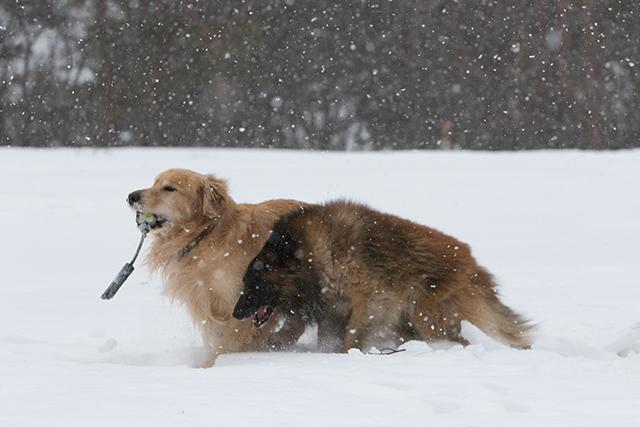 先週の雪遊び_e0192921_23264193.jpg