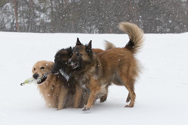 先週の雪遊び_e0192921_23264274.jpg