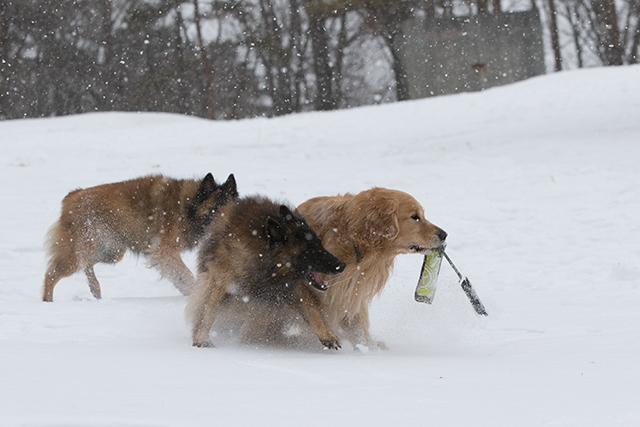 先週の雪遊び_e0192921_23264530.jpg