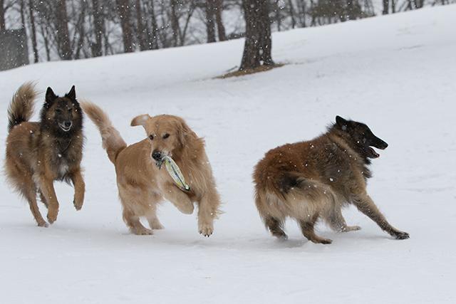 先週の雪遊び_e0192921_23264697.jpg