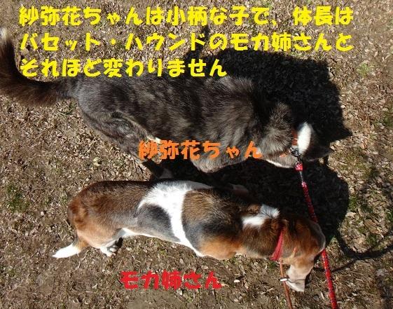f0121712_15105740.jpg