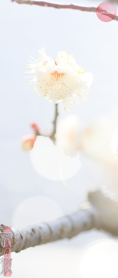 富山県中央植物園 早咲きの梅 ~EOS7D2 + EF100mmF2.8LmacroIS USM~_b0157849_21240349.jpg