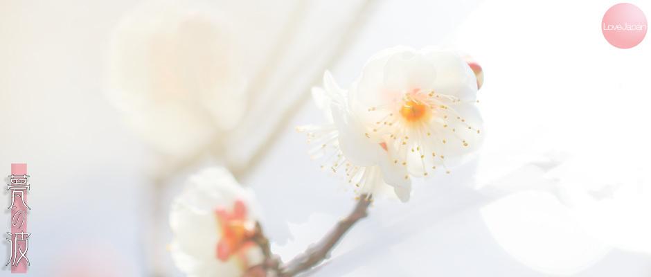 富山県中央植物園 早咲きの梅 ~EOS7D2 + EF100mmF2.8LmacroIS USM~_b0157849_21241064.jpg