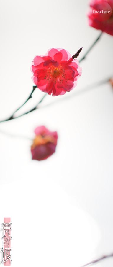 富山県中央植物園 早咲きの梅 ~EOS7D2 + EF100mmF2.8LmacroIS USM~_b0157849_21242955.jpg