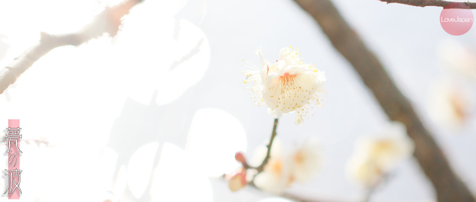 富山県中央植物園 早咲きの梅 ~EOS7D2 + EF100mmF2.8LmacroIS USM~_b0157849_21244681.jpg