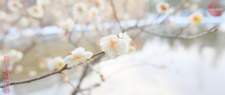 富山県中央植物園 早咲きの梅 ~EOS7D2 + EF100mmF2.8LmacroIS USM~_b0157849_21245323.jpg