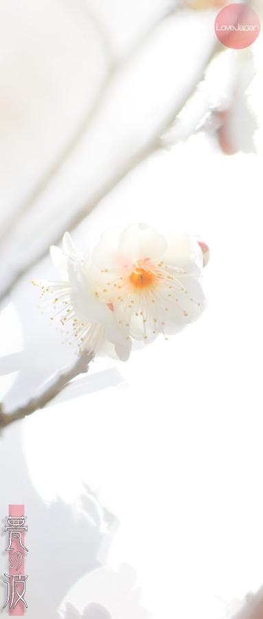 富山県中央植物園 早咲きの梅 ~EOS7D2 + EF100mmF2.8LmacroIS USM~_b0157849_21250109.jpg