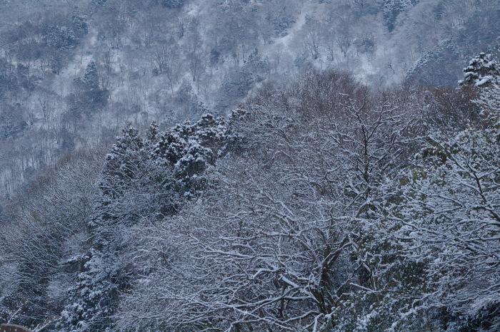京都    2/11 三宅八幡  雪景色_f0021869_23410516.jpg