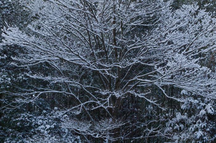 京都    2/11 三宅八幡  雪景色_f0021869_23413340.jpg