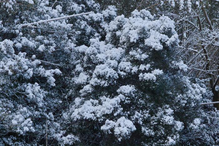 京都    2/11 三宅八幡  雪景色_f0021869_23415967.jpg