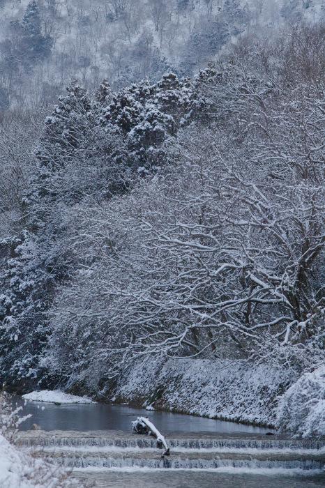 京都    2/11 三宅八幡  雪景色_f0021869_23441097.jpg