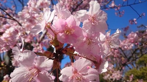 「春はそこまで」_a0075684_23532858.jpg