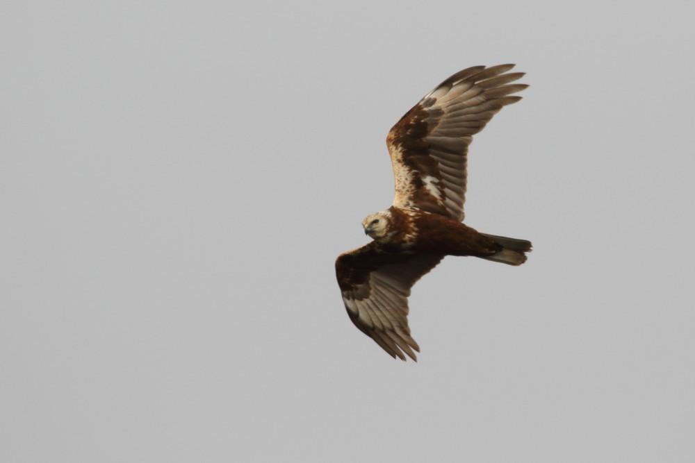 今日の鳥見(2017年2月14日)_f0235311_22142811.jpg