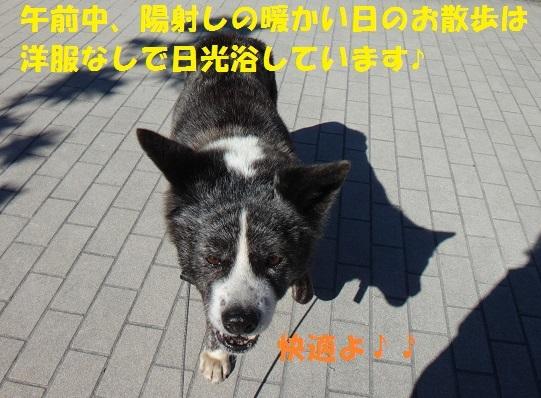 f0121712_08304189.jpg