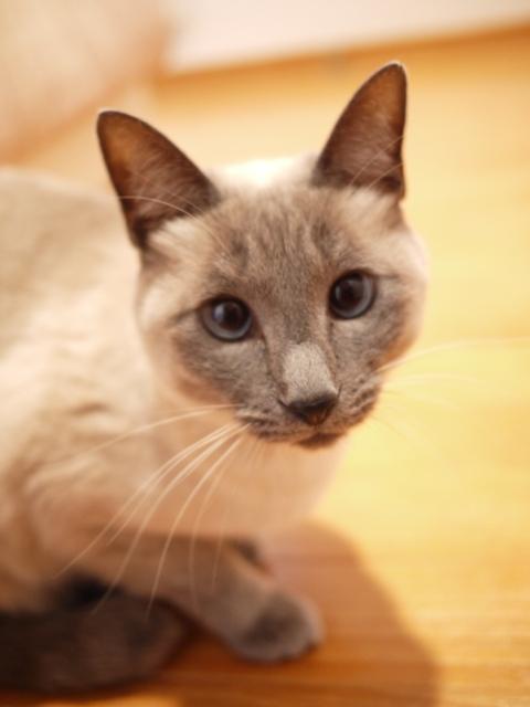 猫のお留守番 しろちゃん編。_a0143140_2144485.jpg