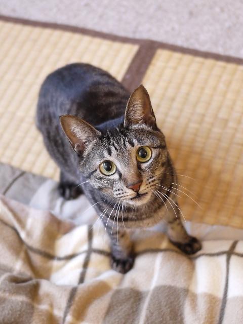 猫のお留守番 きとちゃん編。_a0143140_2149330.jpg