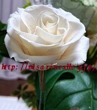 d0306248_22174160.jpg