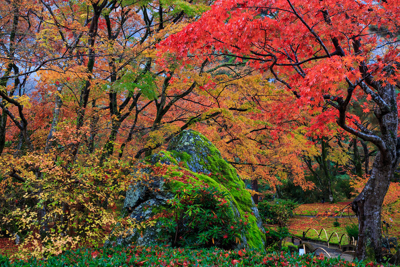京都の紅葉2016 雨の宝厳院_f0155048_23234562.jpg