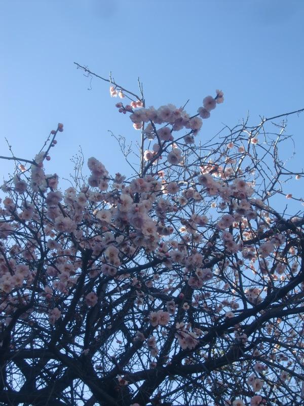 藤村俊二さんが好きな花と言わせたカスミソウ_f0329849_22182531.jpg