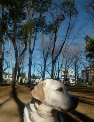 with dog    サージュと水仙と青空と♪_a0165160_16251024.jpg