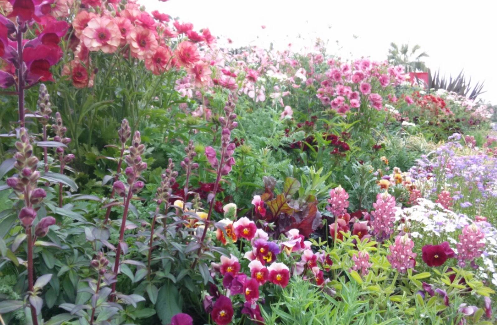 花が大好きな香さん・・・・こどものくにガーデナー・・と言ってもこの広い場所に一人だけ_b0137969_00395369.png