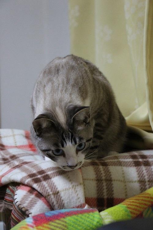 ネコのストレッチ体操_a0333195_20211661.jpg