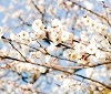 【キャンペーン】「小さい春、み~つけた!」