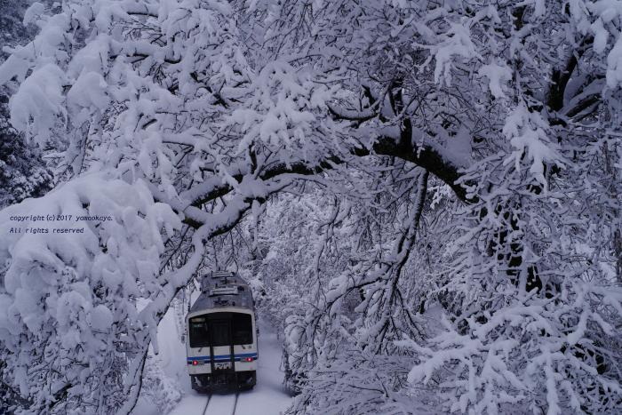 雪の花咲く_d0309612_23244571.jpg