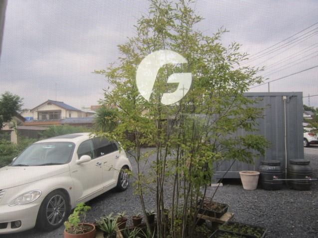 おしゃれな外構工事をご提案! ガーデンフロー太田では、建物に合ったグリーンをご提案。_e0361918_11182258.jpg