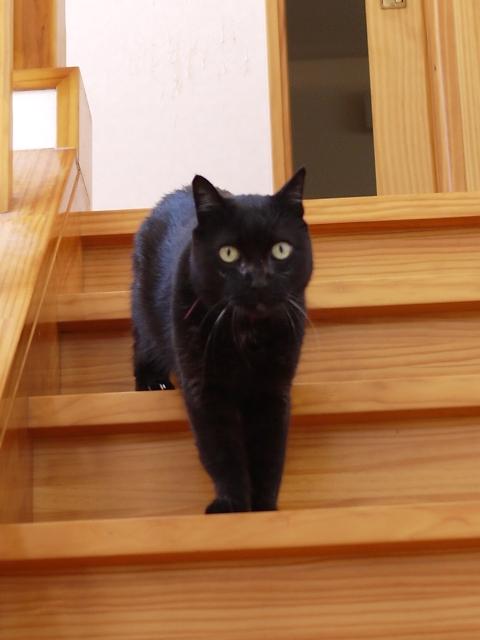 猫のお留守番 けむくん編。_a0143140_22581743.jpg