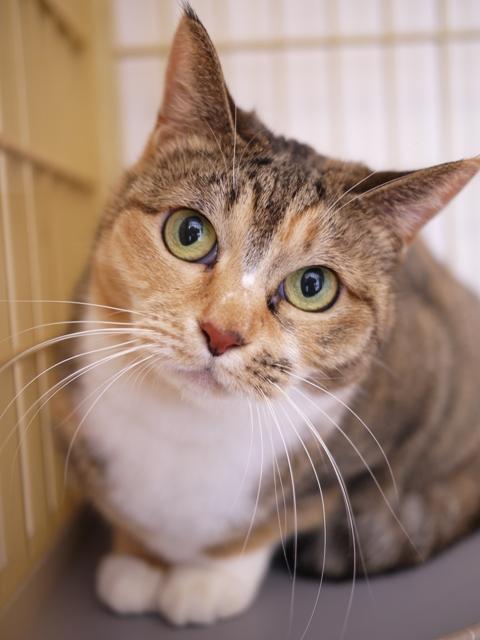 猫のお留守番 きなこちゃん編。_a0143140_2313148.jpg