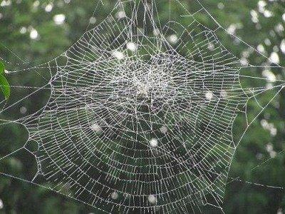 人体蜘蛛の巣説_b0084241_2215563.jpg