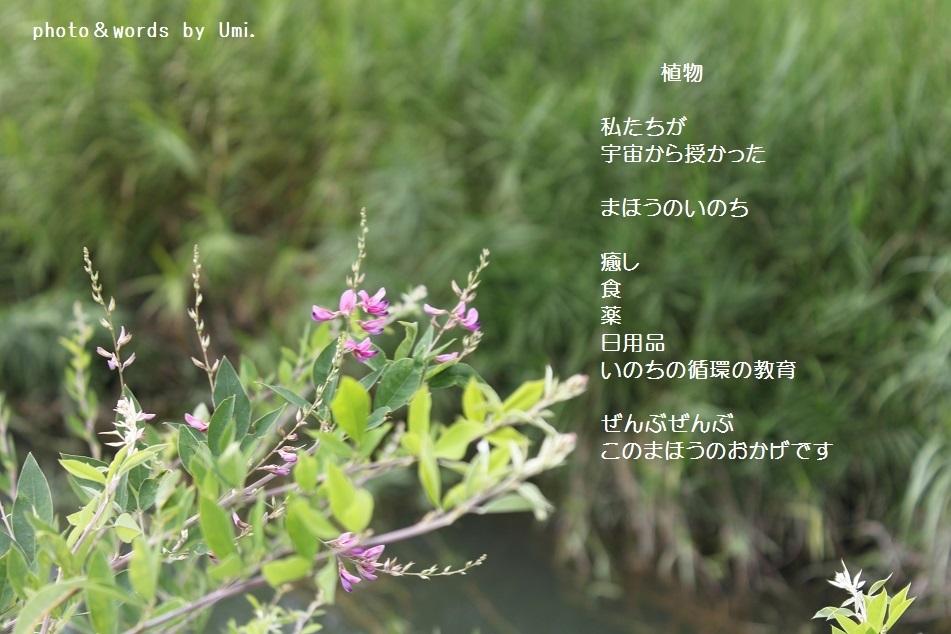 f0351844_16512997.jpg