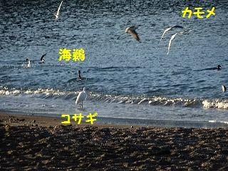 d0353074_17092411.jpg