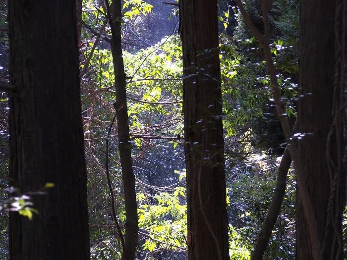 木立の中の若葉_a0149488_22215467.jpg