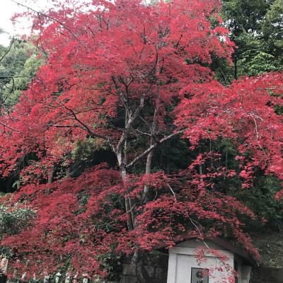 かみさん 京都へ_f0220089_12345389.jpg